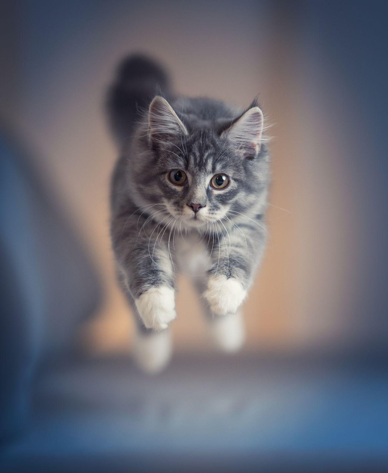Katze rennt davon