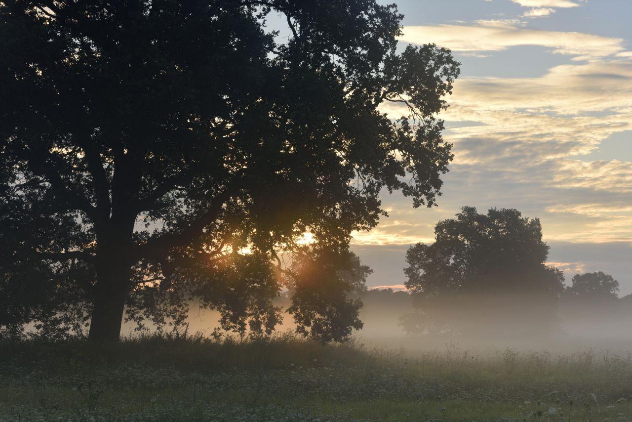 Bodennaher Nebelschleier
