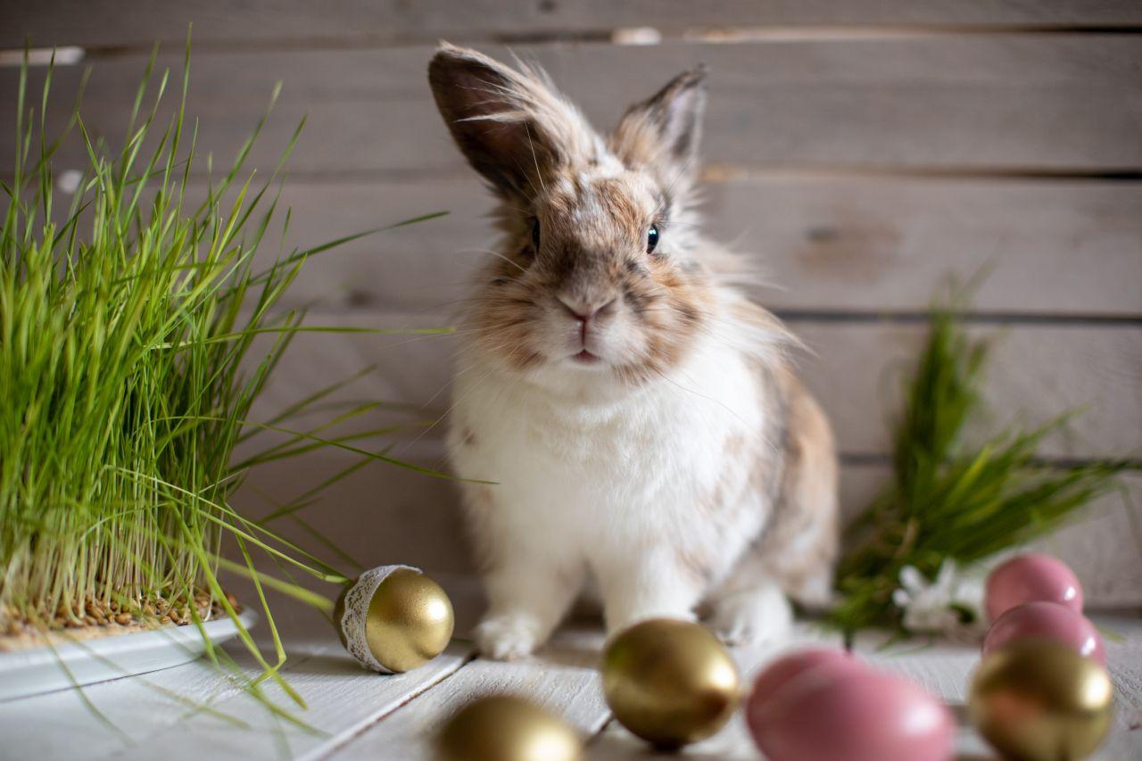 Wieso ein Hase die Eier versteckt - und noch mehr Oster-Geheimnisse