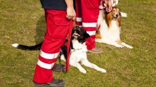 Rettungshundeführer