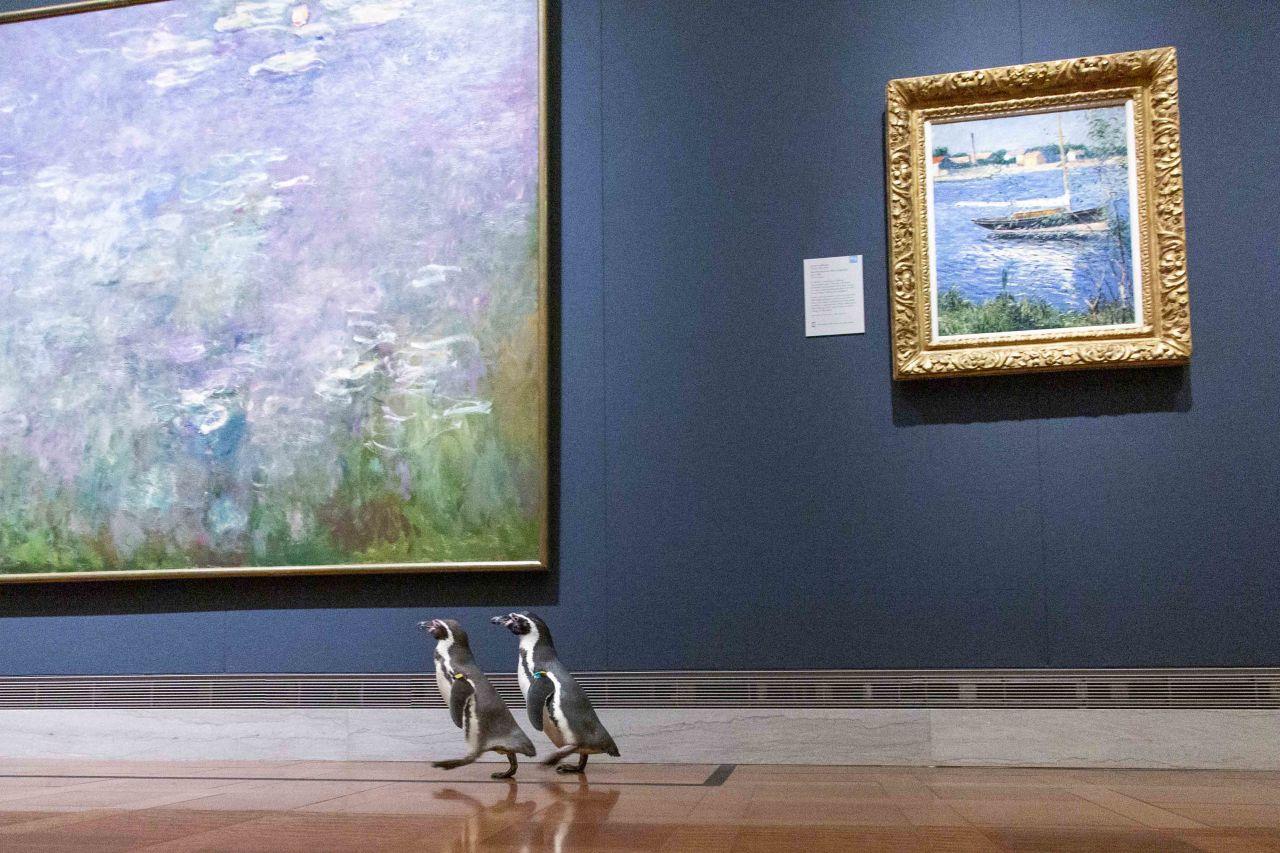 Museum Pinguine
