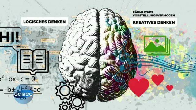 Brain Games: Wie funktioniert unser Gehirn?