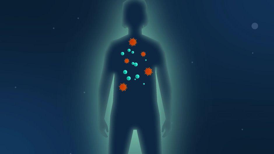 Das Corona-Virus und seine Verwandten: So wirken Viren im Körper