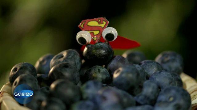 Feuerfest, gesund und lecker: Was die Heidelbeere zur Superheldin macht