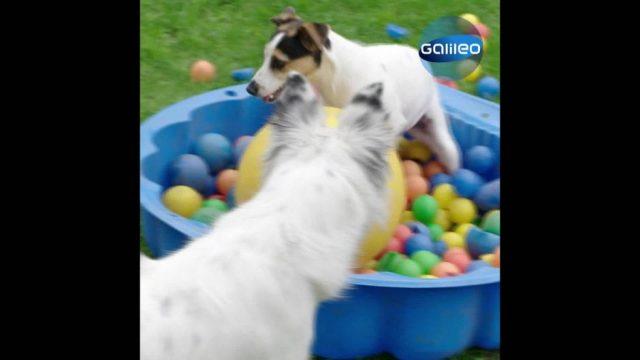 Hunde: 3 überraschende Fakten