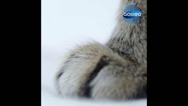 Katzen: 3 Secrets