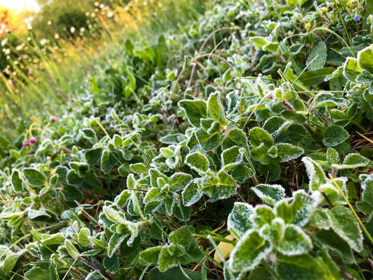Eisheilige Bodenfrost