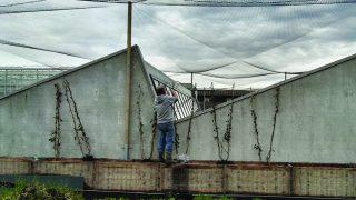 In Anderlecht gibt es ein Dach wo Tomaten und Fische gezüchtet werden.