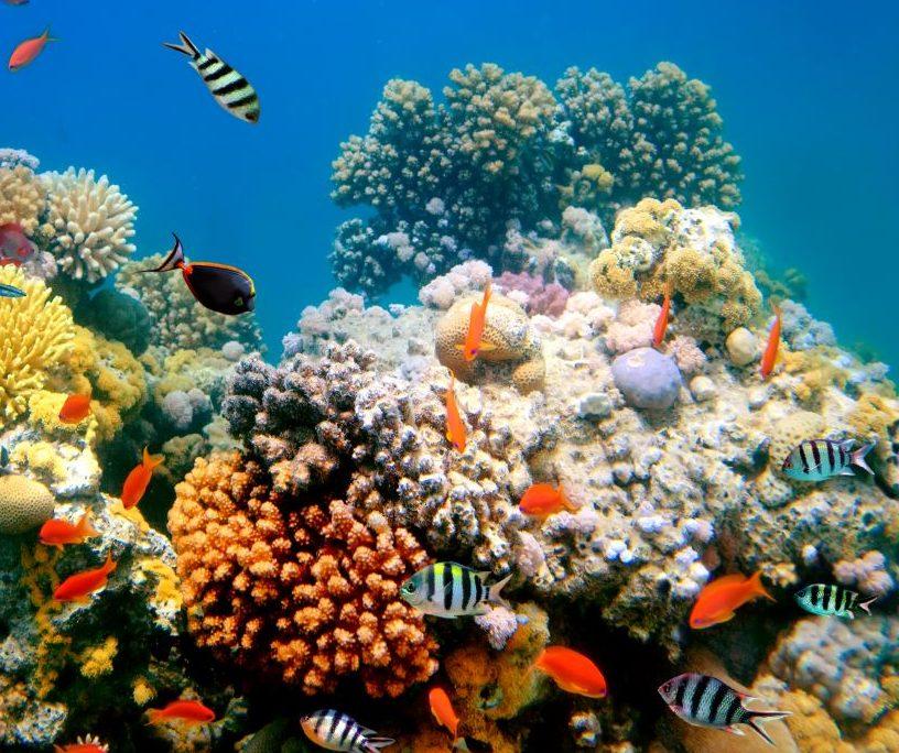 Korallen in Gefahr! So wollen Forschende die Riffe retten