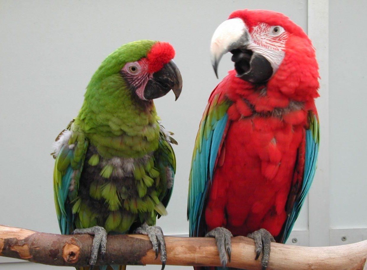 Papageien sprechen miteinander