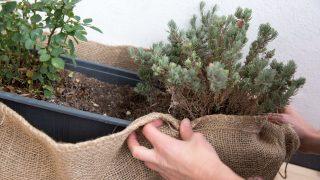 Pflanze Frostschutz