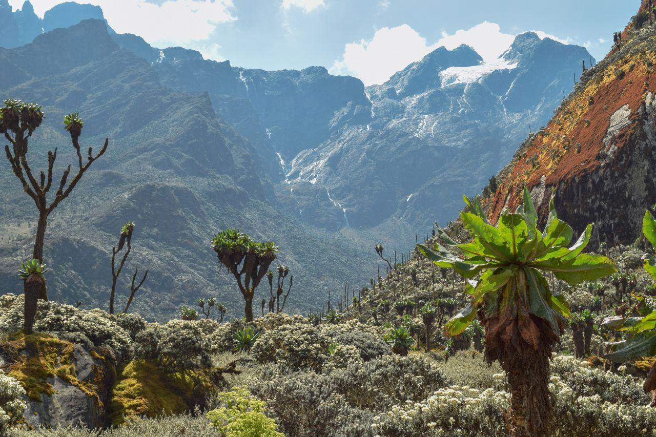 Ruwenzori-Gebirge