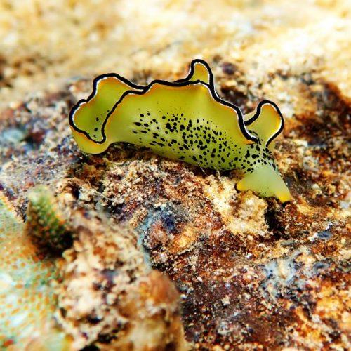 Stell dir vor, du verlierst einen Zahn - und schön wächst dir ein neuer. Das ist aber noch gar nichts gegen die Schnecke, die sich selbst köpft - und der danach ein neuer Körper wächst. Im Clip: Wunder-Tier Axolotl.