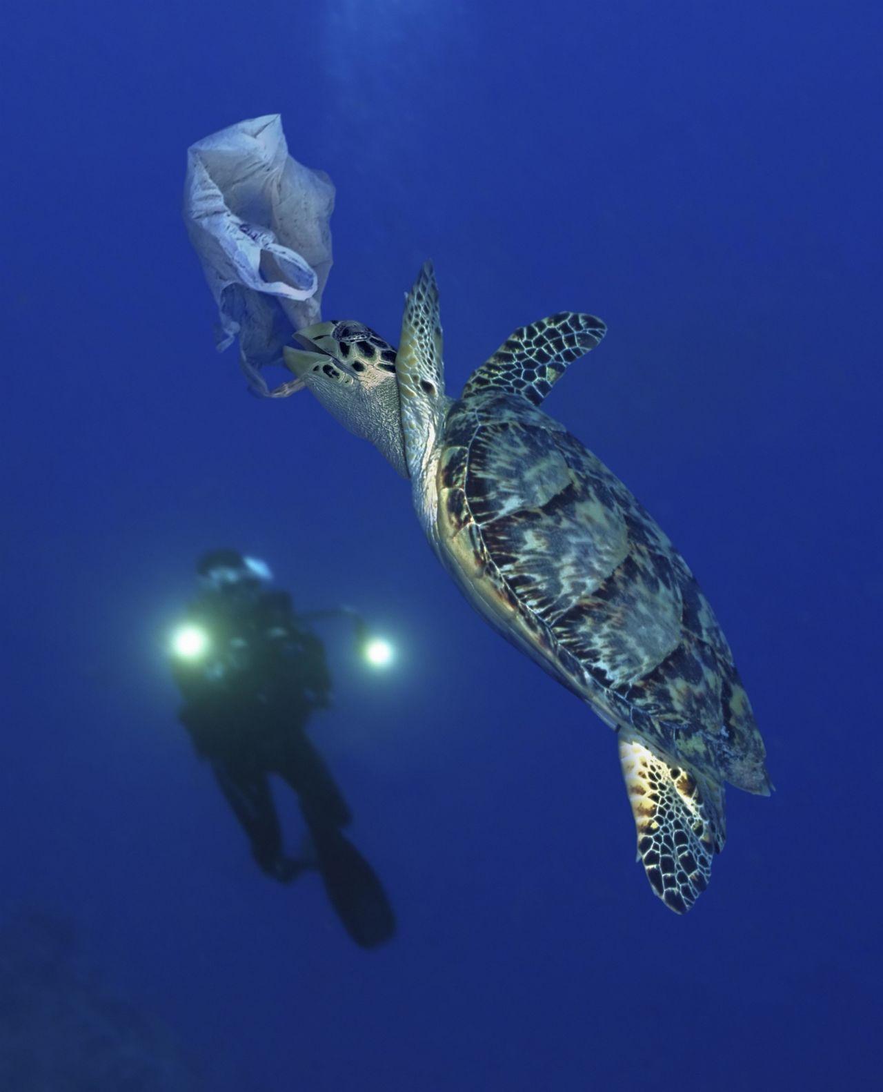 Schildkröte mit Plastik