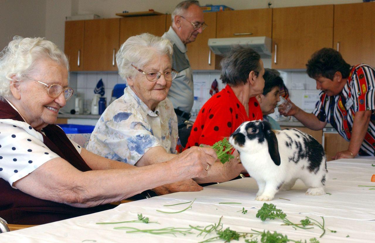 Eine Hasen-Therapie in einem Altenheim