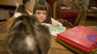Eine Therapie mit Katzen