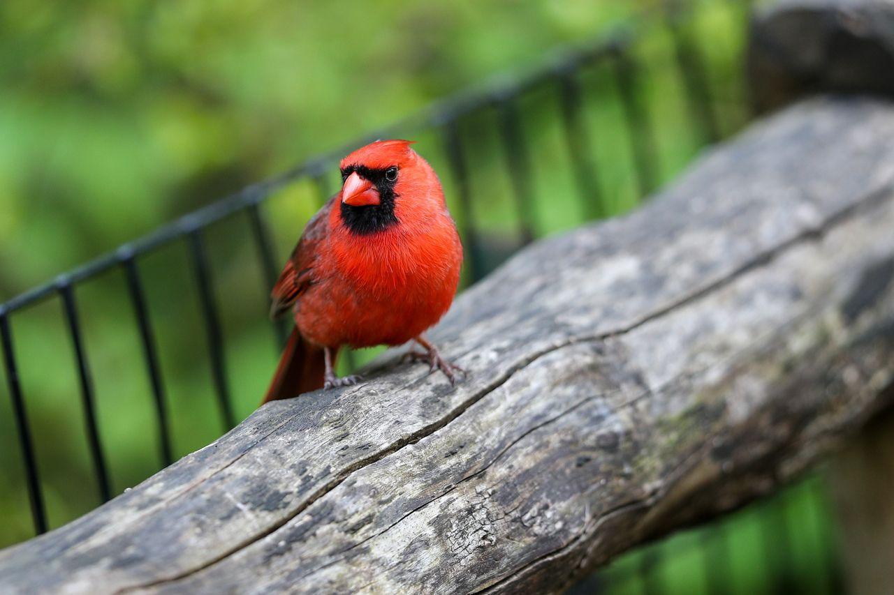 Vogel während Corona-Pandemie im Central Park (New York)