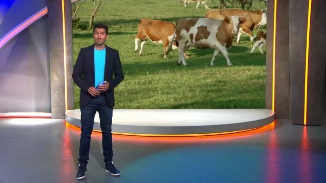 Donnerstag: Die glücklichsten Rinder der Welt