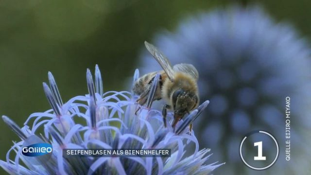 Seifenblasen als Bienenhelfer - wie funktioniert das?