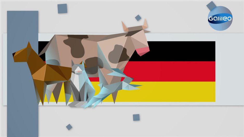 Tierrechte in Deutschland