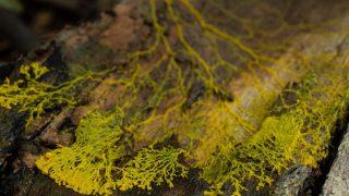 Blob EInzeller auf Baumstamm