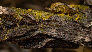Blob Superorganismus Schleimpilz