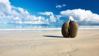 Coco de Mer, die größte Nuss der Welt