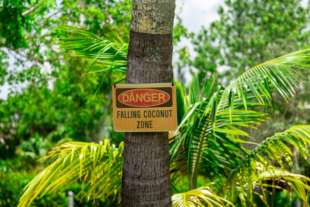 Warnhinweis: herabfallende Kokosnüsse