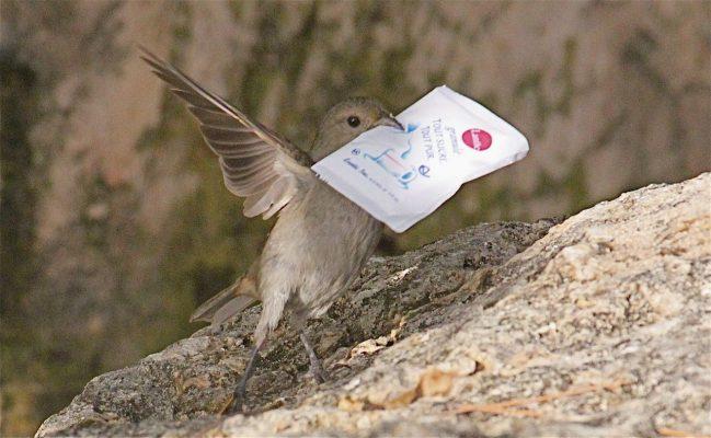Ein Vogel hat sich Zucker geklaut.