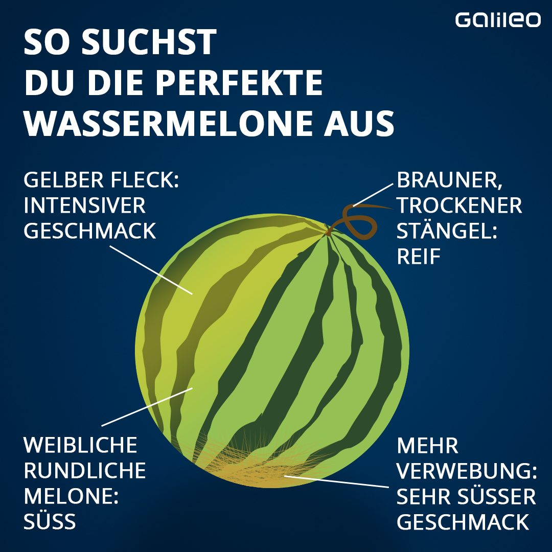 Perfekte Wassermelone