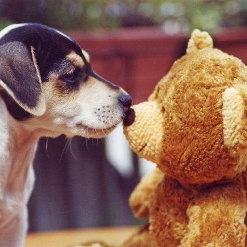 Hund mit Teddybär