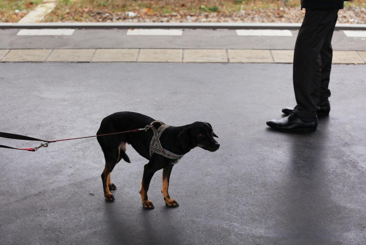 Ein Hund klemmt seinen Schwanz zwischen seine Beine: Ein Zeichen von Angst.
