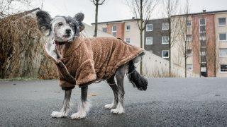 Ein Hund mit Schwanz nach unten steht auf der Straße.