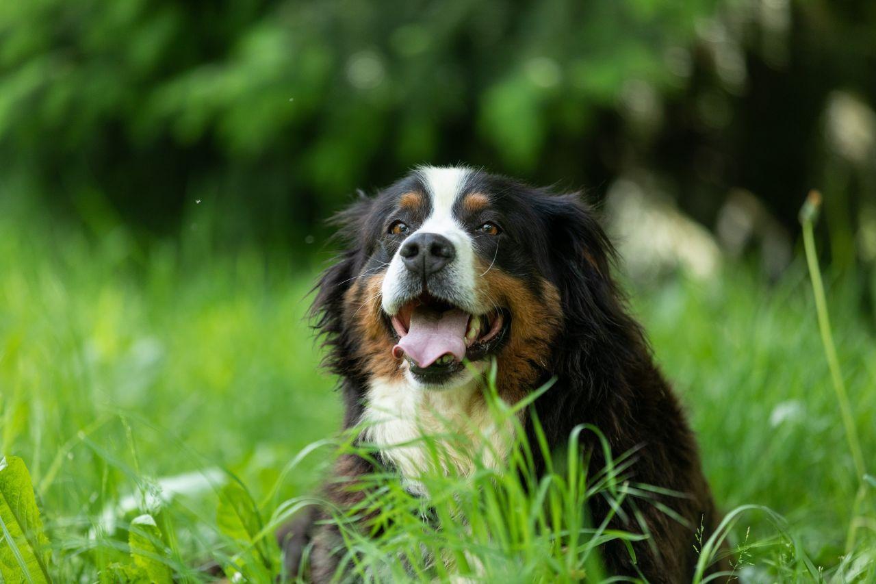Die Geheimnisse der Vierbeiner: Was Hunde und Zweijährige gemeinsam haben