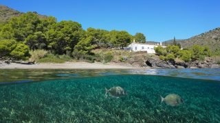 Mittelmeerküste mit Neptungras