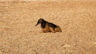 Hund tobt in Posidonia-Resten
