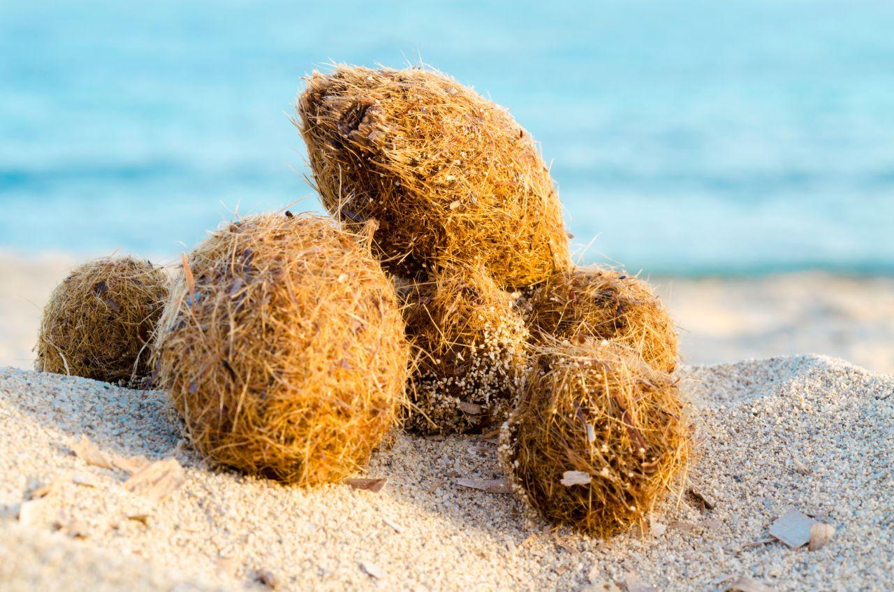 Seebälle vom Neptungras am Strand