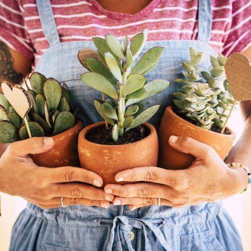 Haushaltsmythos: Wachsen Pflanzen besser, wenn du mit ihnen sprichst?