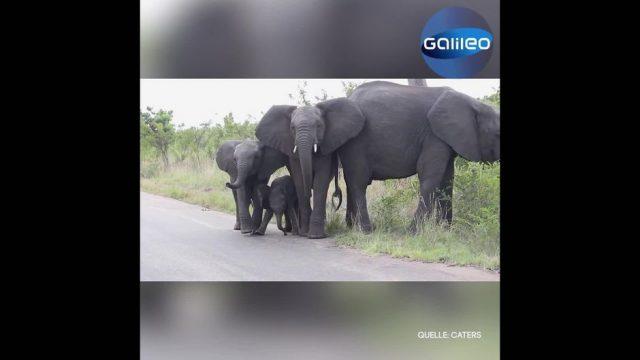 Clips der Woche: Baby-Elefant, Flieger-Innovation und Sonnen-Stürme