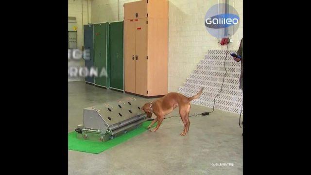 Clips der Woche: Spürhunde im Einsatz und das größte Amphibienflugzeug der Welt