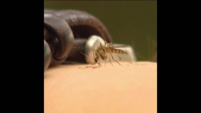 Mücken: Warum jucken die Stiche? - 10s