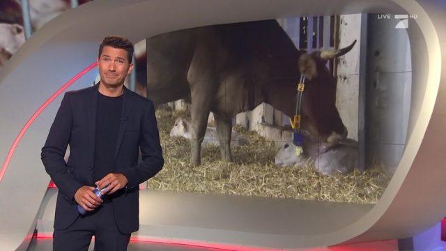 Mittwoch: Alternativen zur Fleischsteuer