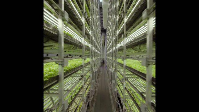 Vertical Farming: So funktioniert's - 10s