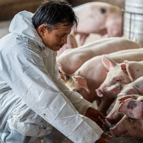 Schweinestall
