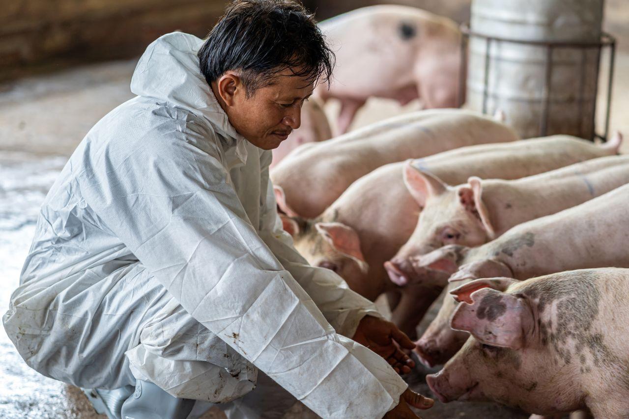Neues Virus entdeckt: Droht uns jetzt auch eine Schweinegrippe-Pandemie?