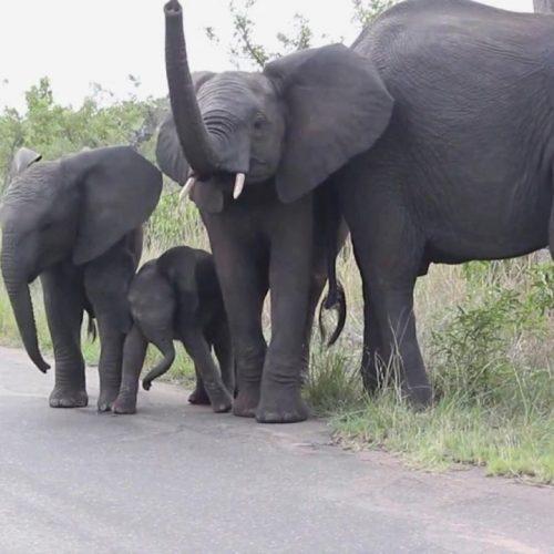 Eine Elefanten-Familie an einer Straße.