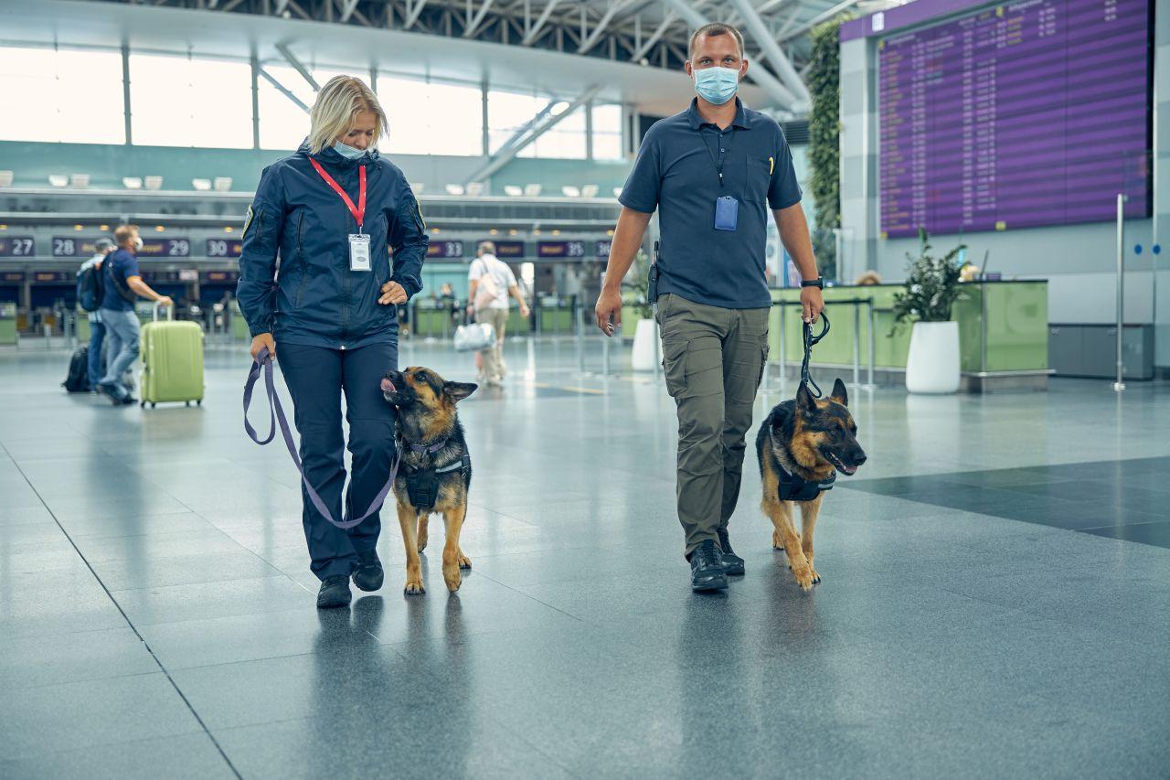 Hunde erschnüffeln Corona-Infizierte: Was Tiere in der Medizin noch können