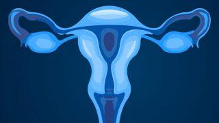 Hormone in den Eierstoecken