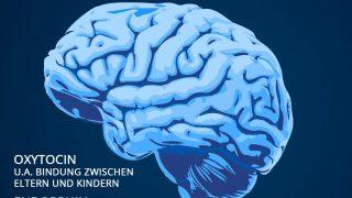 Hormone im Gehirn