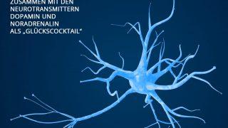 Hormone in den Nervenzellen